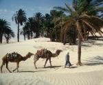 Tunisia & Egipt