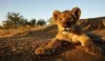 AFRICA DE SUD – CIRCUIT & SEJUR PARCUL KRUGER
