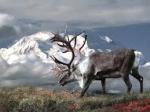 ALASKA & YUKON  Calatorie spre nordul indepartat