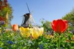 AMSTERDAM  Parada florilor - Timisoara
