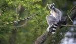 Discover Madagascar, 12 zile - iunie 2020 cu Yulicary Sarracent