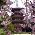 Japonia – Tara Soarelui Rasare 9 zile - Avion