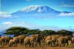 Revelion 2020 - Safari Kenya & plaja Mombasa, 10 zile
