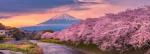 Sakura - Sarbatoarea ciresilor infloriti Japonia, 11 zile - mart
